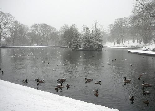 Lake in Lister Park