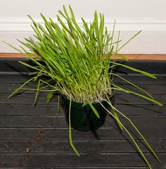 arecales(0.0), flower(0.0), branch(0.0), leaf(0.0), produce(0.0), food(0.0), lawn(0.0), plant stem(0.0), flooring(0.0), soil(1.0), grass(1.0), tree(1.0), plant(1.0), wheatgrass(1.0), herb(1.0), flora(1.0), green(1.0),