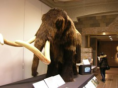 wood(0.0), art(1.0), fur(1.0), museum(1.0), sculpture(1.0), mammoth(1.0),
