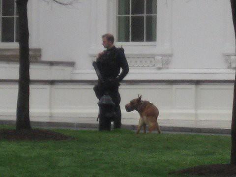 Breaking news!!! Dog poops in President Obama's Yard ...