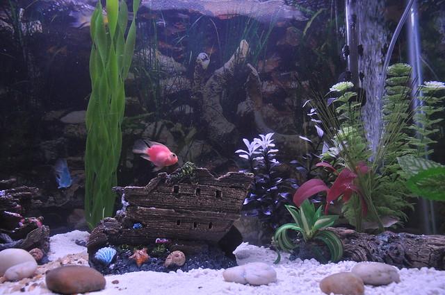 Fresh warm water tank my 29 gallon fresh warm water fish for Warm water fish