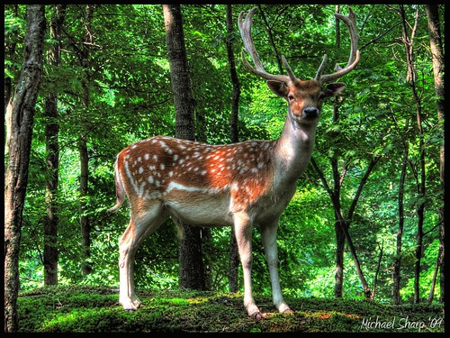 park nature canon quebec omega deer antlers buck hdr autofocus montebello paintnet photomatix g10 rememberthatmomentlevel4 rememberthatmomentlevel1 rememberthatmomentlevel2 rememberthatmomentlevel3 rememberthatmomentlevel5