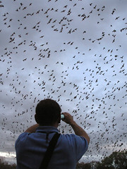 Shooting video with phone - Bracken Cave Bats
