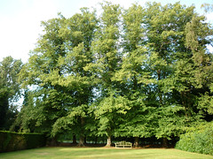 big tree, small bench