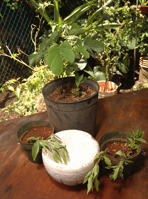 Plants for the Herbal Remedies