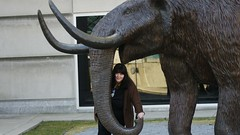indian elephant(0.0), zoo(0.0), horn(0.0), wildlife(0.0), animal(1.0), elephant(1.0), elephants and mammoths(1.0), mammoth(1.0), fauna(1.0),