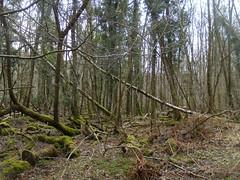 Mossy woodland
