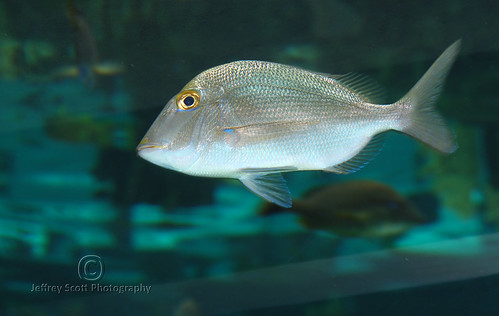 Flickriver photoset 39 fish 39 by thejeffreywscott for Florida tropical fish farms