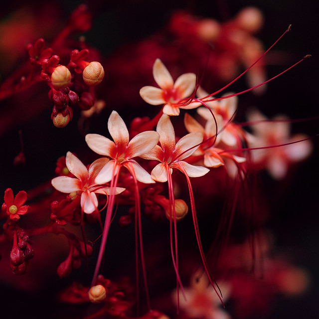 ~ Little Red Flowers ~