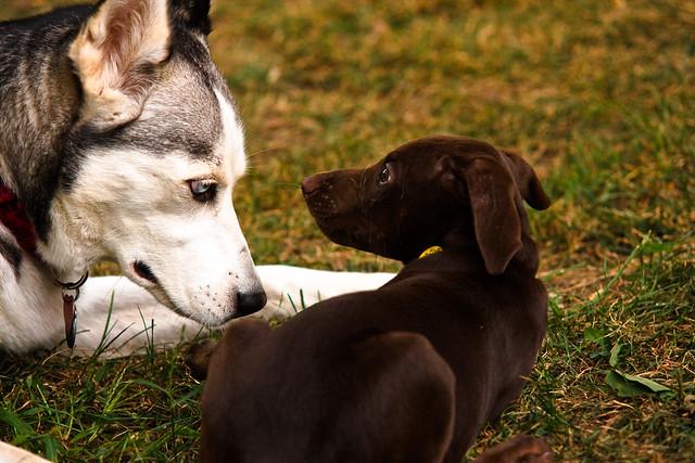 Misty Eyes Dog Rescue