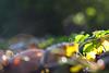 Laub|boden|satz, der; Was vom Sommer übrig bleibt by bavarianview