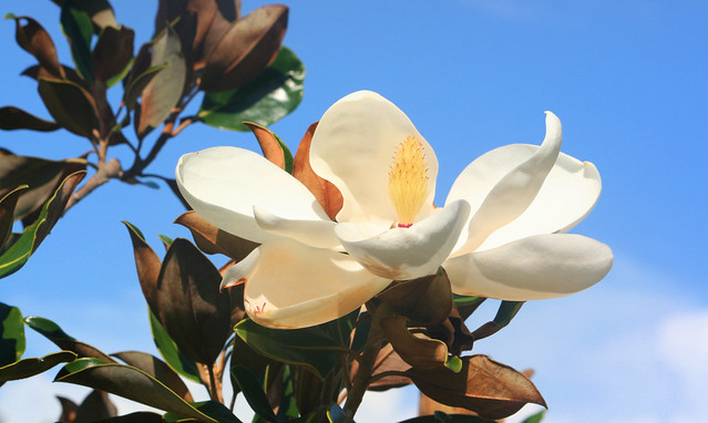 Natural Health Magnolia Tx