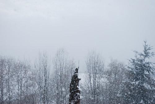 snow portland view