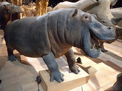 art, sculpture, horn, rhinoceros,
