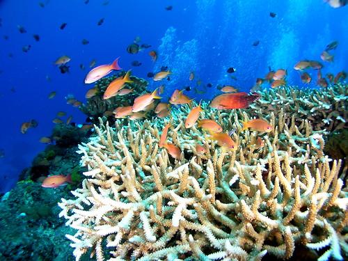 照片提供:中研院生物多樣性研究中心 珊瑚礁演化生態與遺傳研究室