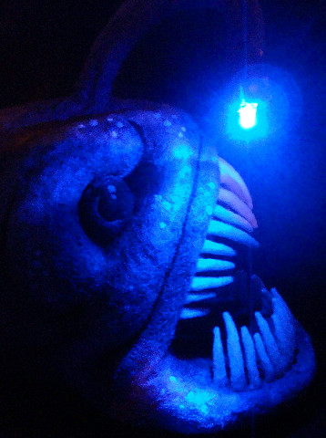 3791580923 for What is an angler fish