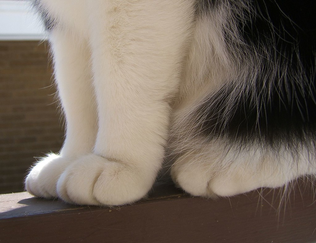 Funky Cat Foot Anatomy Adornment - Human Anatomy Images ...