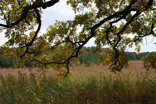 autumn trees tree fall leaves leaf branch prairie taltreearboretumandgardens pioneerwomanlandscapesassignment