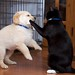 Puppy vs Kitty… Fight!