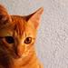My cat3 by amyzura