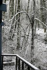 we woke up to snow. again.    MG 6398