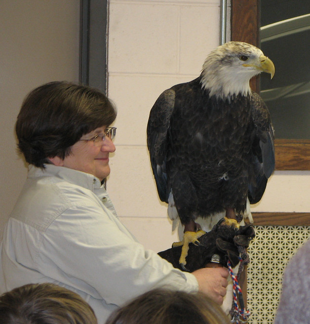 Raptor Program Bald Eagle