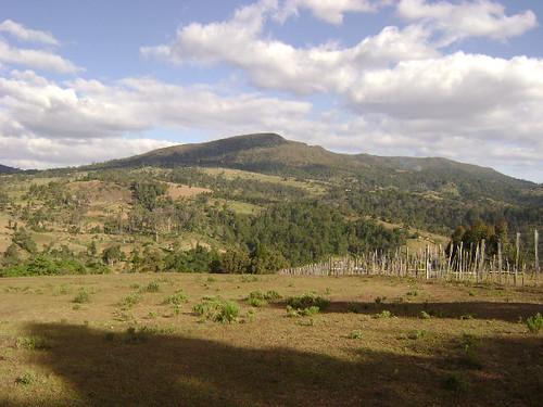 3236396367 c59f0de2a4 Imágenes frescas de forestación