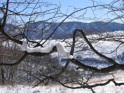 lebanon snow virginia clinchmountain