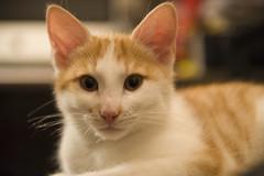 Kater Mio und andere Katzen