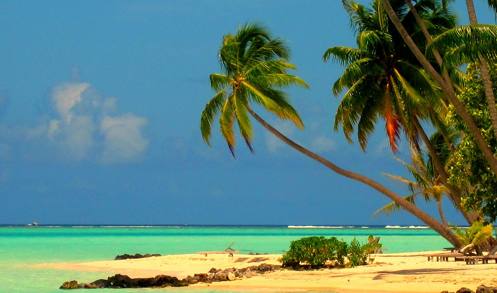 Palm trees in Bora Bora