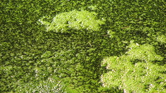 shrub(0.0), flower(0.0), garden(0.0), leaf(0.0), grass(0.0), herb(0.0), hedge(0.0), vegetation(0.0), groundcover(0.0), green(1.0), moss(1.0),