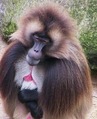 Wilhelma - Zoo, Tiere - animals