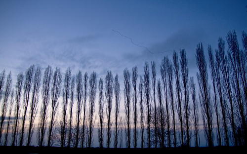 park trees sunset tree birds washington bravo state cranes getty sandhill submit potholes gettysubmit 200903180012