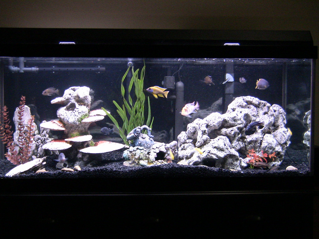 Cichlid forum substrate help for Black sand fish tank