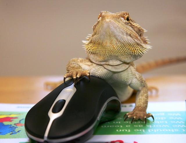 Computer literate lizard !!