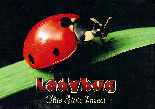 Ohio State Insect | Flickr - Photo Sharing!