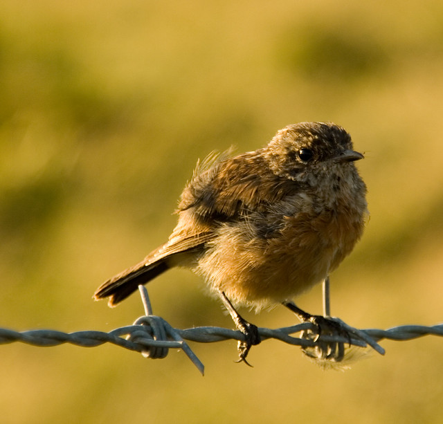 bird-on-a-wire