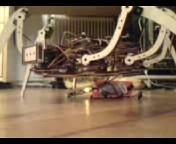 Spiderbot by Daniel