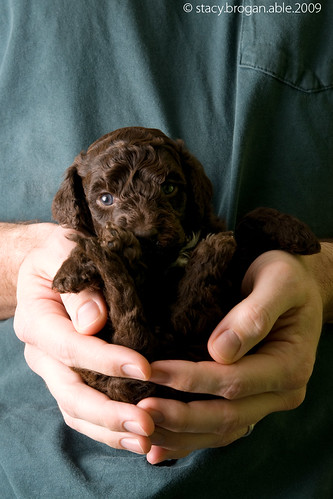 A puppy in the hand...