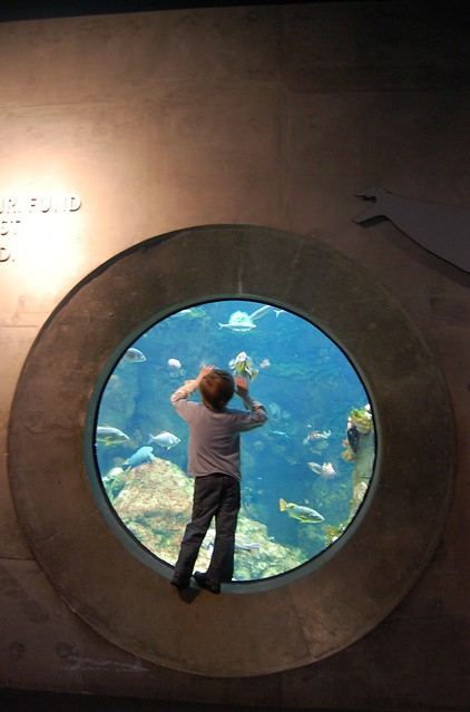 Child staring at Aquarium