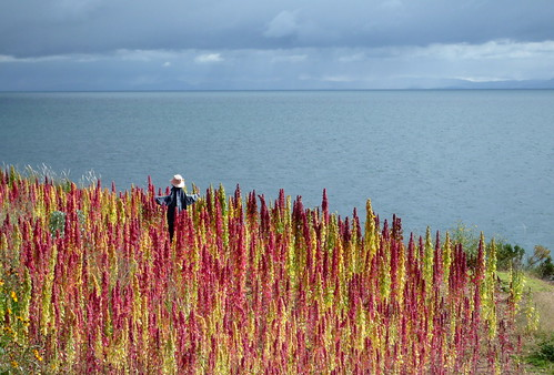 Red and Yellow Quinoa, Lago Titicaca