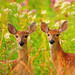 Fawns! by JRIDLEY1