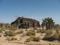 Cima, Mojave National Preserve, California
