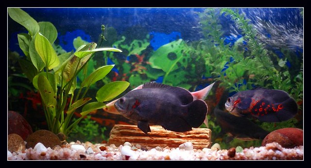 Decoration Aquarium Om