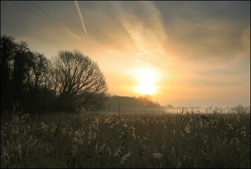 england mist sunrise reeds norfolk marsh chedgravecommon