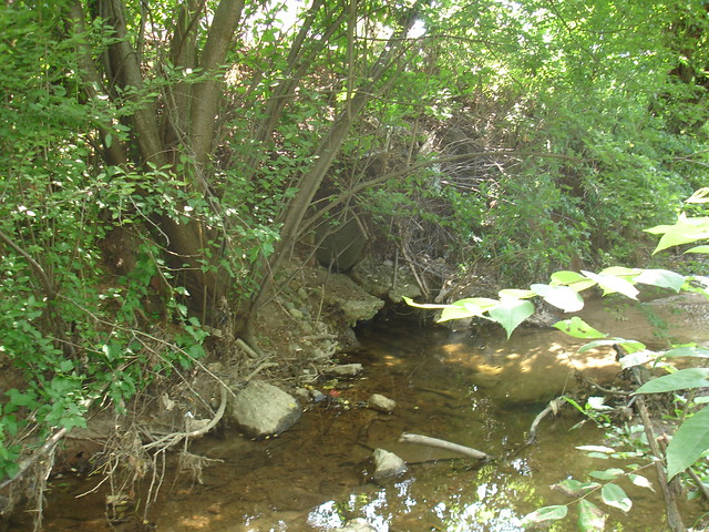 Bzak landscaping yard waste : Yard waste construction debris along bread and cheese creek in the