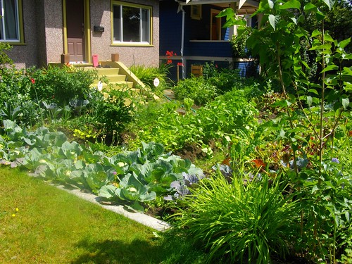 Creating a front yard vegetable garden the garden lady for Creating a vegetable garden