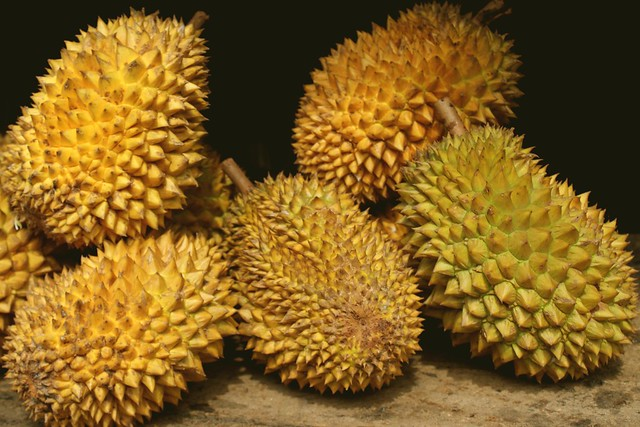 durian world smelliest fruit ever Tasting the most expensive durian in the world | nonthaburi to penang, malaysia  most expensive durian in the world on  is less nutrient to each fruit as a.