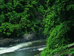 Dense green jungles
