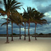 Palm Trees Leading Up to the South Beach by photoshy